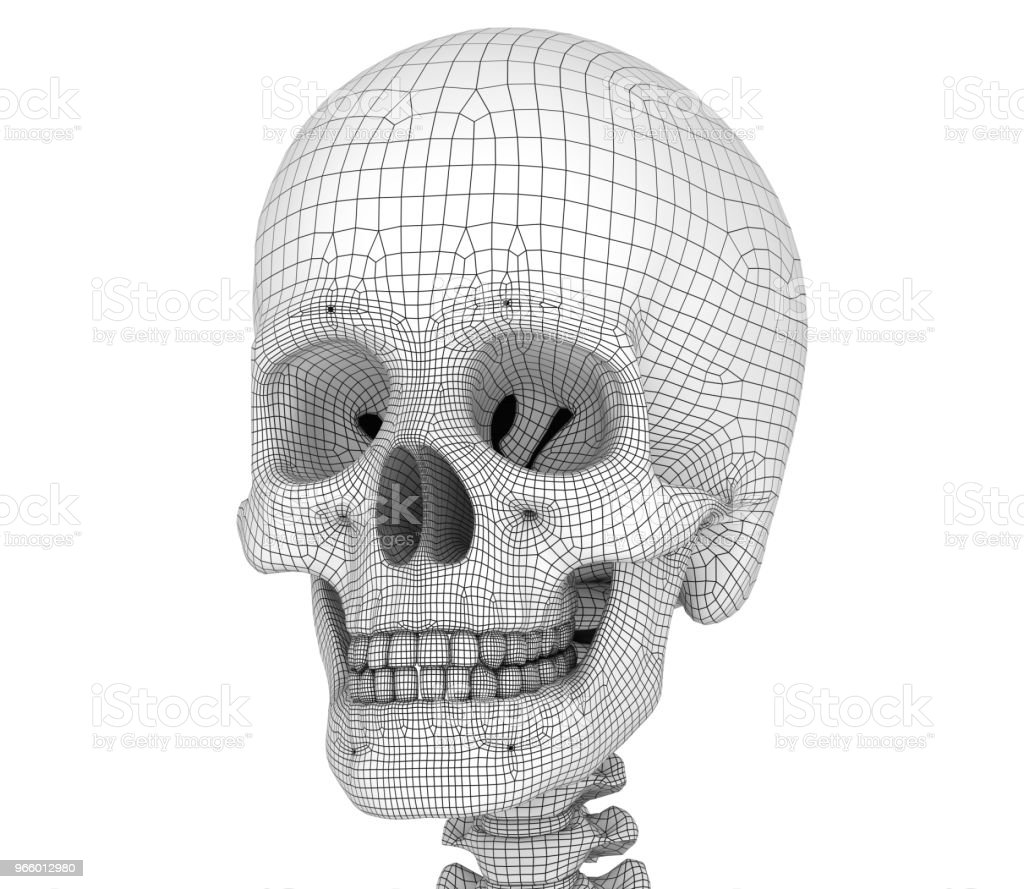 Menselijke schedel skelet, geïsoleerd. Medisch nauwkeurige 3D-illustratie. - Royalty-free Anatomie Stockfoto