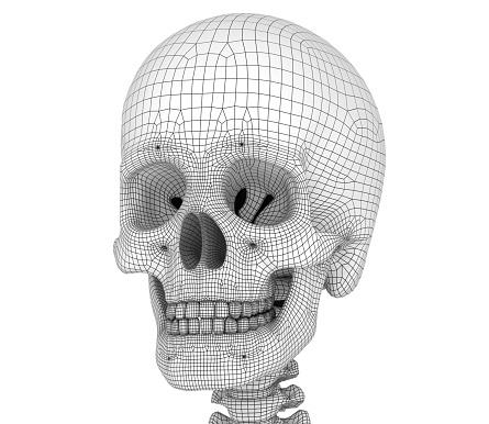 Menselijke Schedel Skelet Geïsoleerd Medisch Nauwkeurige 3dillustratie Stockfoto en meer beelden van Anatomie