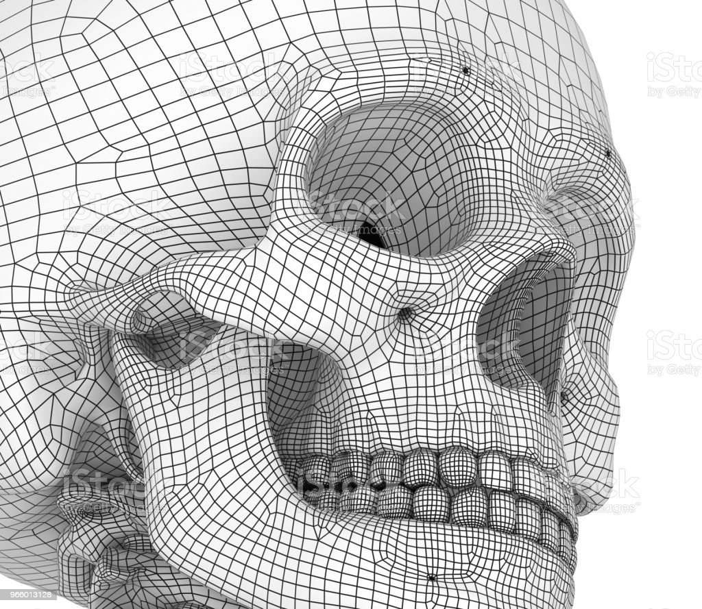 Human skull skeleton, isolated. Medically accurate 3d illustration . - Royalty-free Anatomia Foto de stock