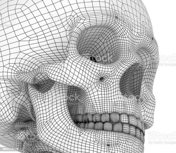 Human Skull Skeleton Isolated Medically Accurate 3d Illustration - Fotografias de stock e mais imagens de Anatomia