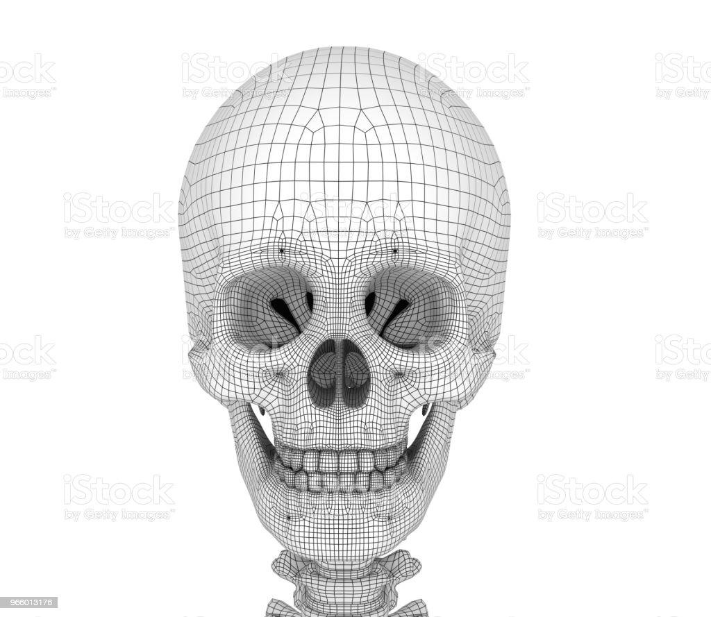 Fotografía de Cráneo Humano Esqueleto Aislados Médico Preciso ...