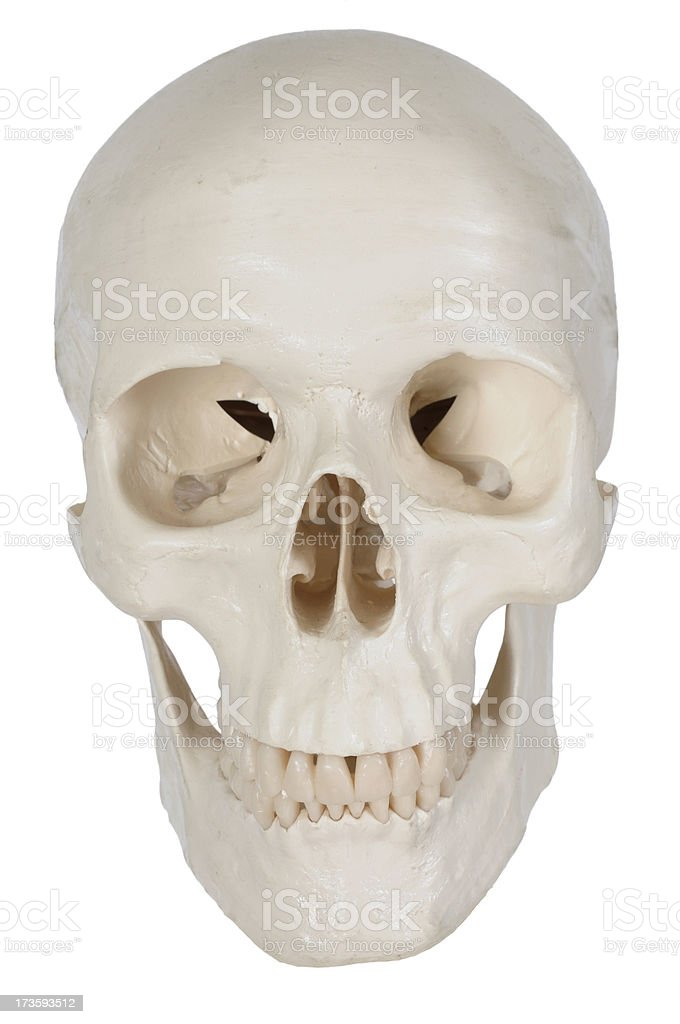 Menschlicher Schädel Struktur Stock-Fotografie und mehr Bilder von ...
