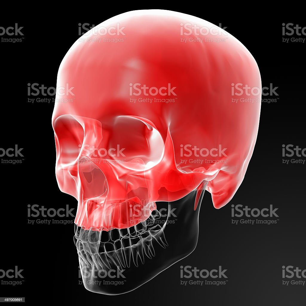 Human Skull. Upper half. stock photo