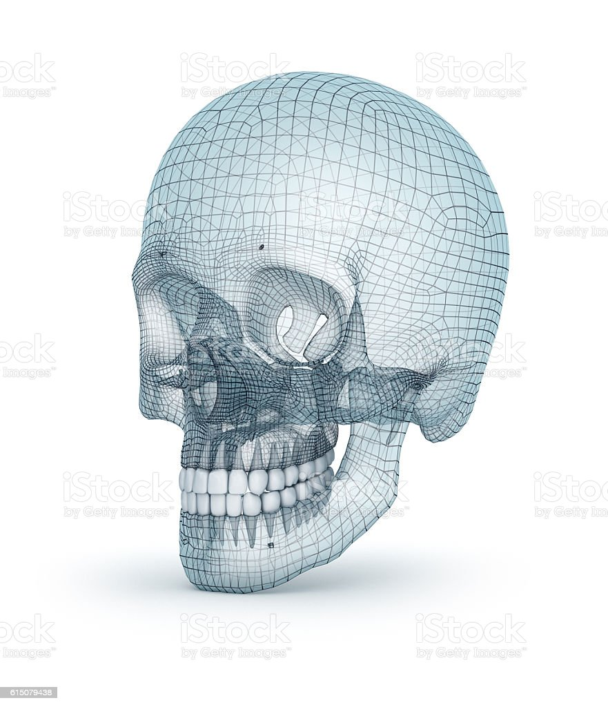 Human skull wire model, 3D render stock photo