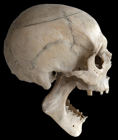 A human skull with a wide-open jaw, isolated on a black background in close-up.