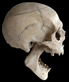 istock A human skull with a wide-open jaw, isolated on a black background in close-up. 1209239761