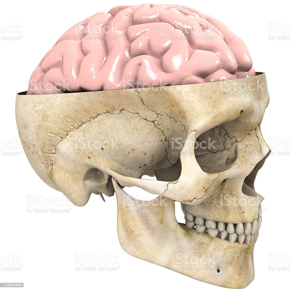 Human Skull With Brain Exposed Stock Photo & More Pictures of ...