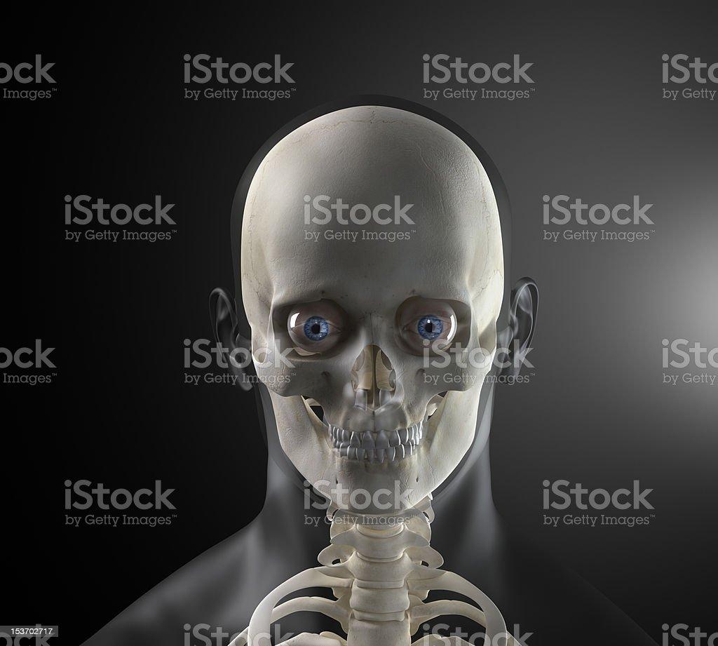 Human skull with visible eyeball stock photo