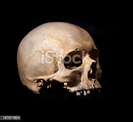 Human Skull Without Jaw Bone Stock Photo More Pictures Of Black
