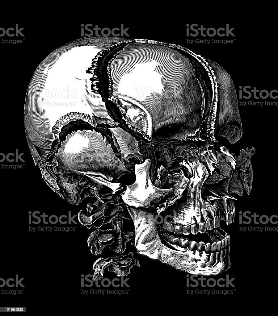 Human Skull,19Th Century stock photo