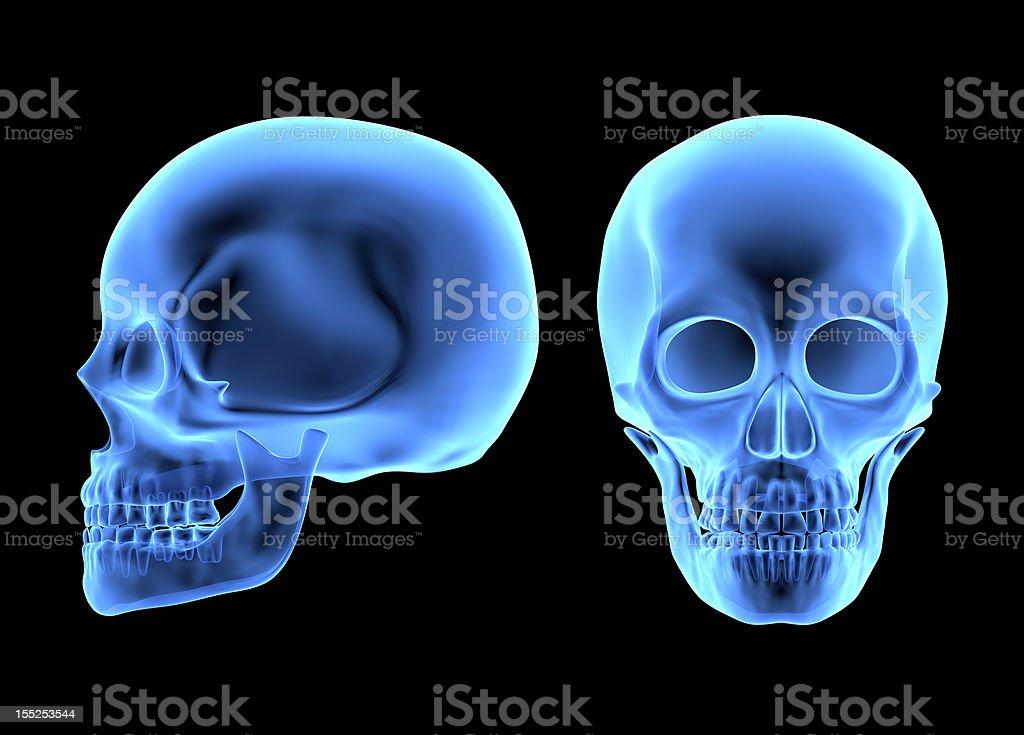 Fotografía de Cráneo Humano y más banco de imágenes de Anatomía | iStock