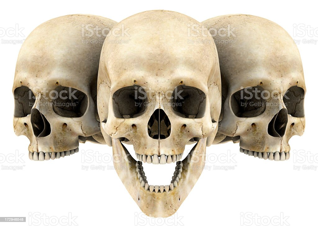 Human skulls with isolated background royalty-free stock photo