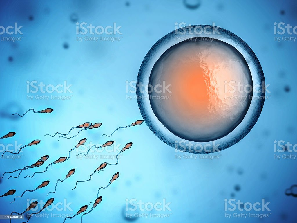 human sperm and egg cell stock photo