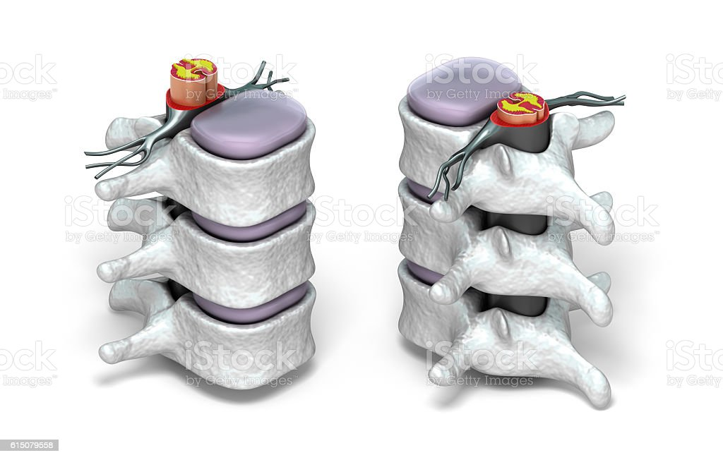 Human spine in details: Vertebra, bone marrow, disc and nerves. stock photo
