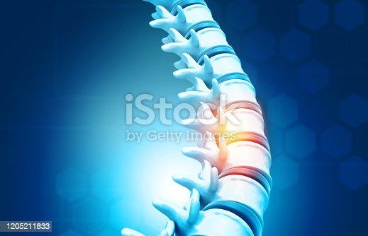 Human spine, vertebrae anatomy on science background. 3d illustration