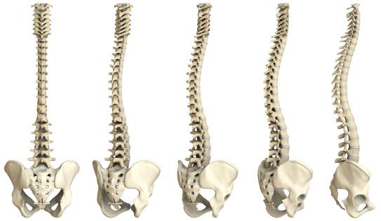 Digital medical illustration: Human spine featuring vertebrae (cervical (C1-C7), thoracic (T1-T12) and lumbar (L1-L5)) vertebrae, discs and pelvis.