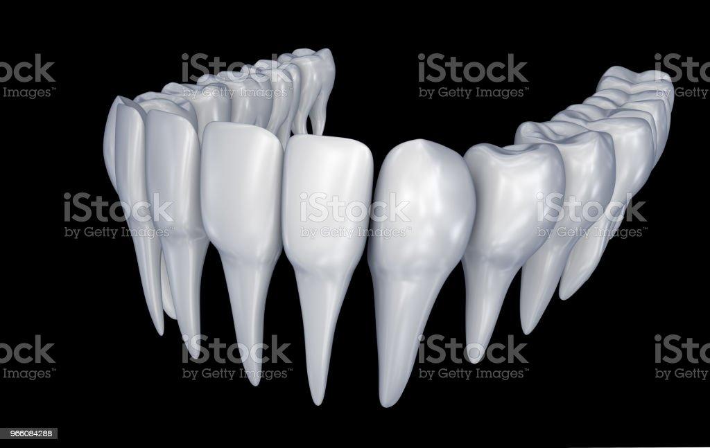 Människans tänder 3d instalation. Medicinskt korrekt tandvård anatomi. 3D illustration - Royaltyfri Anatomi Bildbanksbilder