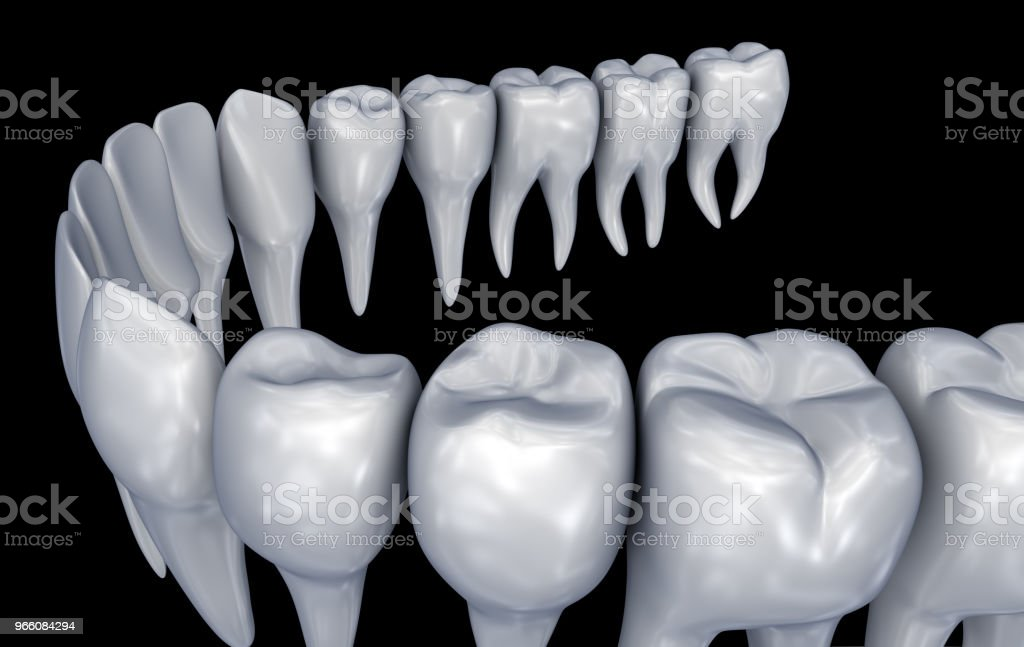Menselijke tanden 3d instalation. Medisch nauwkeurige tandheelkunde anatomie. 3D illustratie - Royalty-free Anatomie Stockfoto