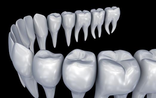 Menselijke Tanden 3d Instalation Medisch Nauwkeurige Tandheelkunde Anatomie 3d Illustratie Stockfoto en meer beelden van Anatomie