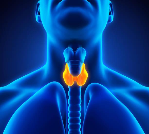 ilustração de anatomia humana glândula tireoide - cancer da tireoide - fotografias e filmes do acervo