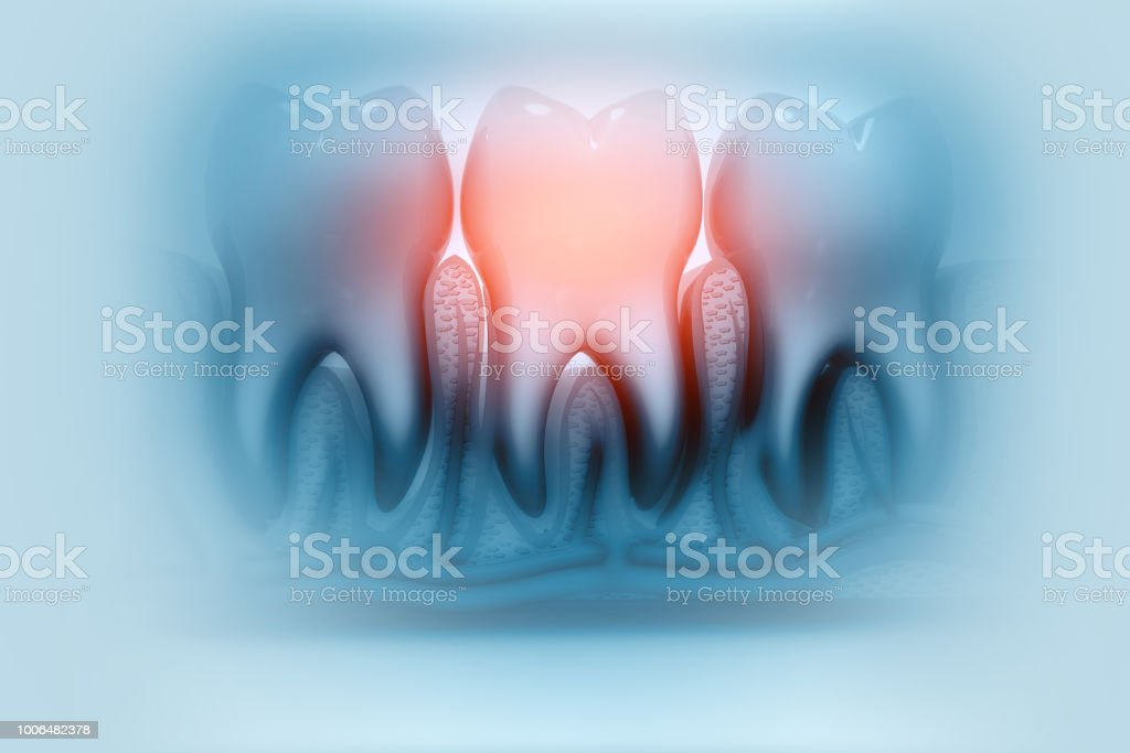 Human Tooth Anatomy Stock Photo & More Pictures of Anatomy | iStock