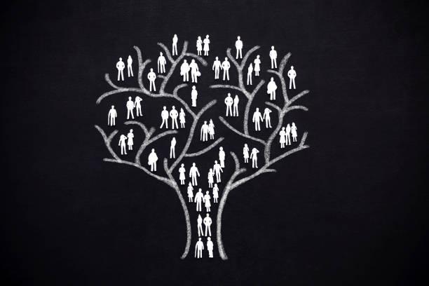 arbre humain - arbre généalogique photos et images de collection