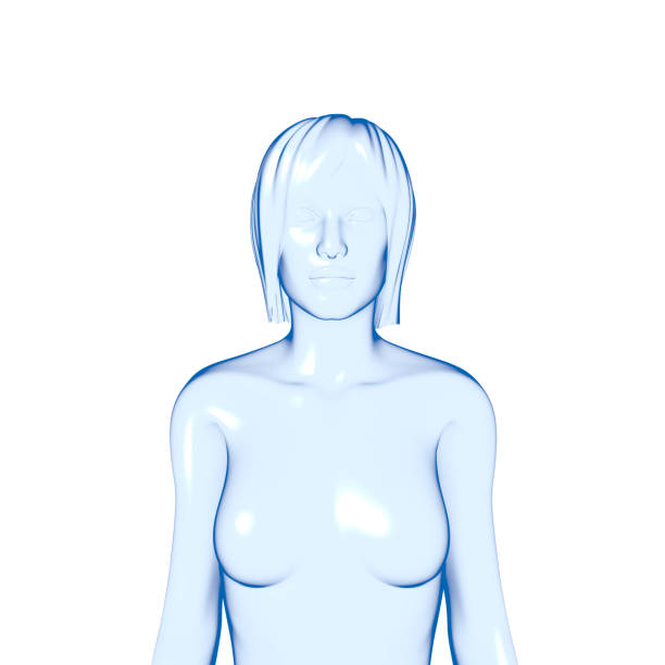 Royalty Free Female Anatomy Upper Body Pictures Images And Stock