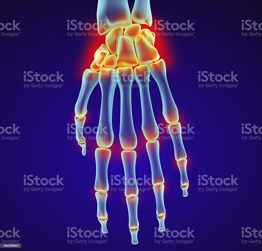 Human wrist anatomy. Xray view. stock photo