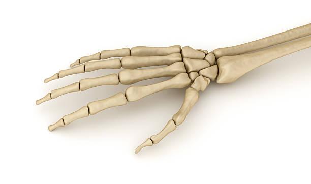 human wrist skeletal anatomy. medically accurate 3d illustration - skelett hand stock-fotos und bilder