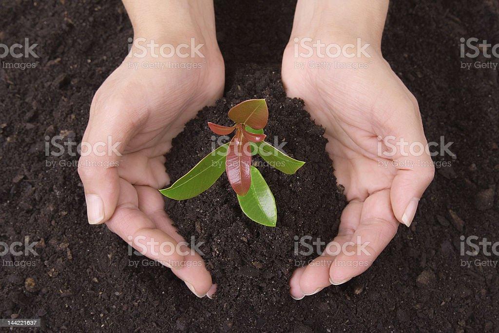Human_hands_soil_and_plant - fotografia de stock