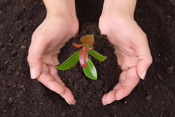 Human_hands_soil_and_plant - fotografia de stock