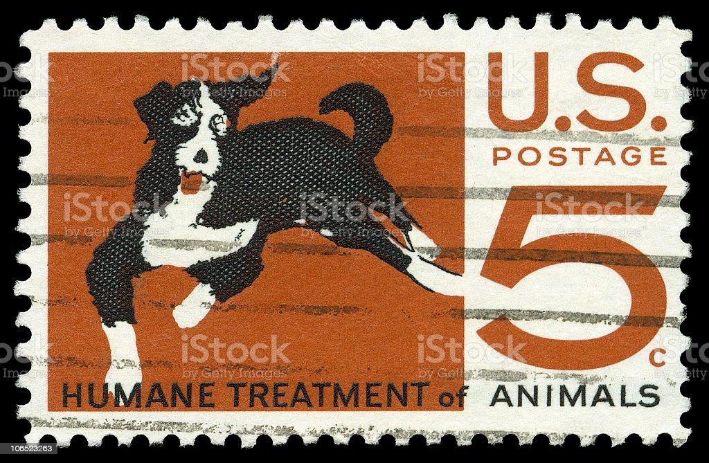 Humane Treatment of Animals royalty-free stock photo