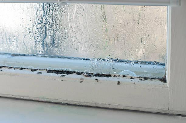feuchtigkeit - farbe gegen schimmel stock-fotos und bilder
