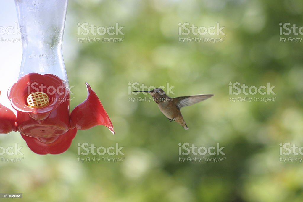 Humming birds #2 royalty-free stock photo