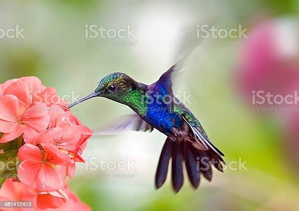 Photo of hummingbird and flower