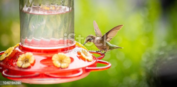 A juvenile hummingbird approaches a brightly colored feeder.