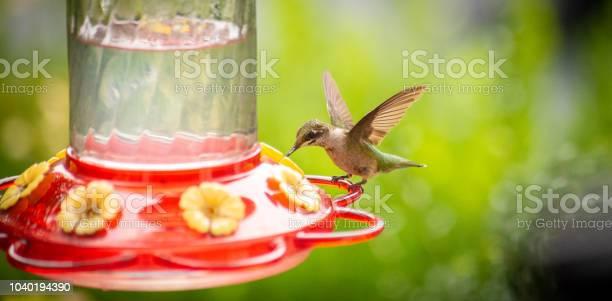Hummingbird at a feeder picture id1040194390?b=1&k=6&m=1040194390&s=612x612&h=ssylyfoxqv56bghqn39cldds4jw2jmot4bqgos av4i=