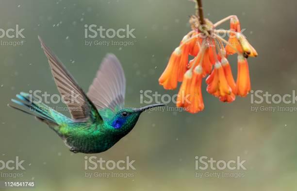 Photo of Hummingbird in Costa Rica