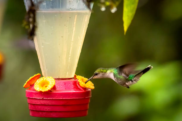 Kolibri im Brunnen – Foto