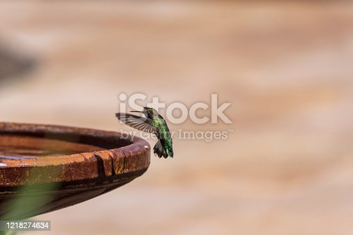 A hummingbird making a landing on the edge of a backyard birdbath.  The image has ample copy space.