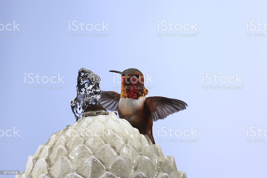 Hummingbird on a water fountain stock photo