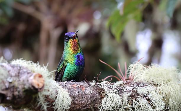 Kolibri sitzt auf einem Zweig – Foto