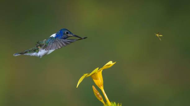 Hummingbird y avispa stock photo