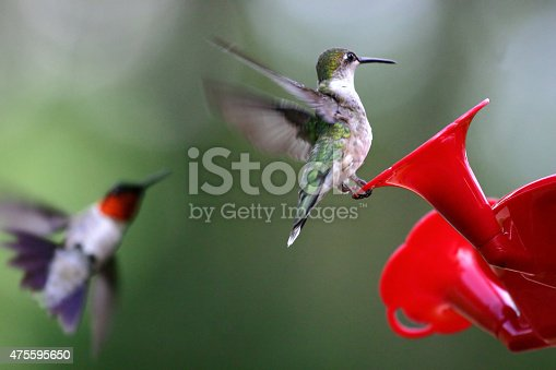 Photograph of two hummingbirds at a red feeder.