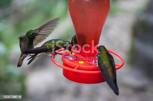 A group of hummingbirds feed and fly around a red bird feeder