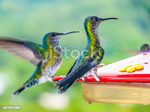 hummingbirds in Brazil at a feeding station