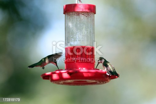 two hummingbirds drinking from a nectar feedermore hummingbirds