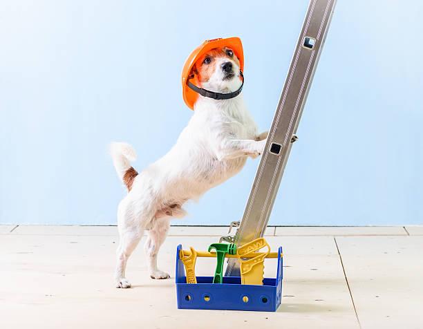 humor worker with box full of tools standing on ladder - hundezubehör diy stock-fotos und bilder
