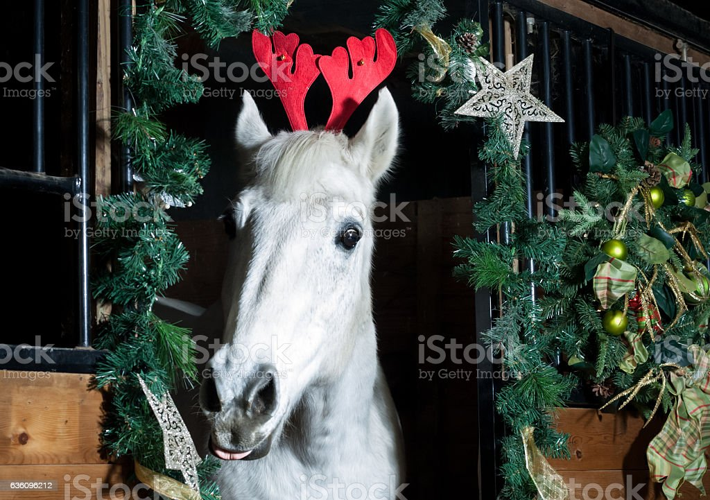 Humorous Holiday Horse Stock Photo Download Image Now Istock