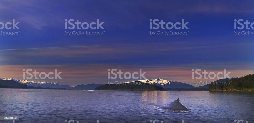 Humpback Solitude stock photo